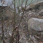 Trash near the falls