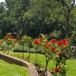 Magnificent summer garden
