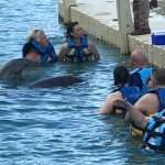 The Dolphin Encounter