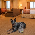 We offer an array of pet-friendly rooms for those traveling with their furry friends.