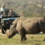 The proximity and game viewing at Mala Mala is unrivaled.