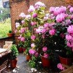 Garden Room Terrace (Private to Garden Room Guests)