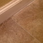Hairs and grime on floor in bathroom