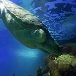 Dingle Oceanworld