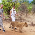 Photo of Walking with Lions at Victoria Falls