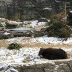 Photo of Bronx Zoo