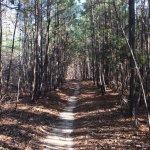 Foto de Harbison State Forest