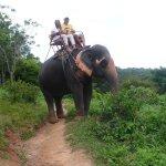 Zdjęcie KokChang Safari Elephant Trekking