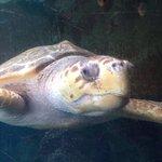 Photo of Oceanarium