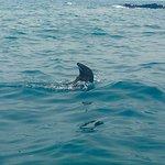 صورة فوتوغرافية لـ Seal Swim Kaikoura