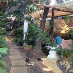 garden of dream