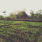Wheet fields