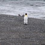 Photo of Ushuaia Bay