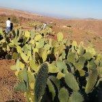 Terres d'Amanar의 사진