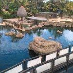 uShaka Sea World Aquarium Foto