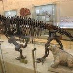 Зал с динозаврами.