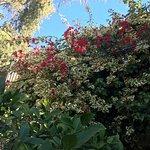 Dinah's Garden Hotel Photo