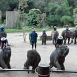 spettacolo degli elefanti