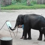 elefante pittore