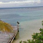 Photo de Pelican Beach - South Water Caye