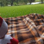 Picnic areas dotted all over the grounds under trees. (Tinsel, our personal Elf enjoys the view)