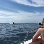The humpback whales in Banderas Bay put on a show for us!