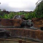 Photo of Volcano Lodge & Springs