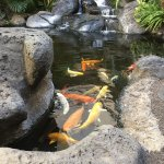 One of several waterfalls and koi fish