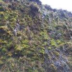 Aguacerales, una pared de musgo que captura el agua de las nubes