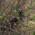 Avistamiento de aves, desde mirlas hasta cóndores