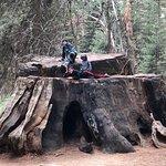 Photo de Big Stump Basin