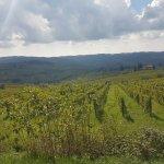 Foto de Tuscan Wine Tours by Grape Tours