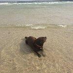 long beaches for dog walking