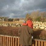 Foto de Colchester Zoo