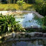 Pool nature_large.jpg