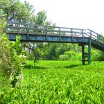 lookout bridge