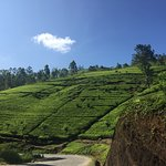 Photo of Ceylon Tea Trails