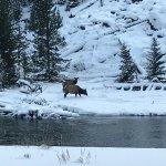 Photo de Old Faithful Snow Lodge and Cabins