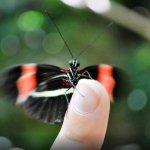 Tambopata tours picture of butterfly in Peru Amazon in Puerto maldonado