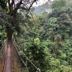 sky bridges high in rainforest