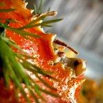 fantastic crab