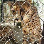 Moholoholo Wildlife Rehab Centre