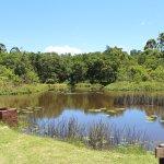 Pond where people fish