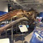 ภาพถ่ายของ Canadian Museum of Nature
