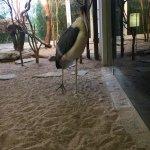 Zoologischer Garten Frankfurt/Main Foto