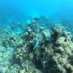 Coral off of Eden Rock