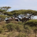 Photo of Kati Kati Tented Camp