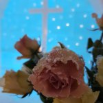 Ice rose on the alter