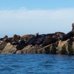 Sea Lions near Mazatlan, Mexico