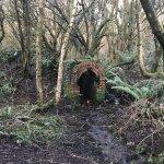 Brynna Woods and Llanharan Marsh Nature Reserve